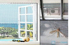 Lưới chống côn trùng giải pháp tuyệt vời ngăn chặn dịch sốt xuất huyết