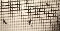 Công ty thi công cửa lưới chống muỗi tốt nhất tại Hà Nội