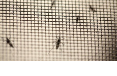 Tác dụng của cửa lưới chống muỗi