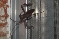 Lưới chắn côn trùng inox 304 là gì?