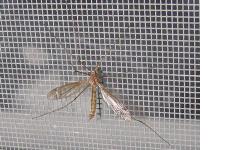 Lưới chống muỗi bằng inox 304 siêu bền